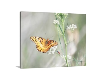 Butterfly Art Print, Nature Photography, Butterfly Gift, Garden Art, Golden Butterfly, Insect Art, Wildflower Picture, Spring Nature Art
