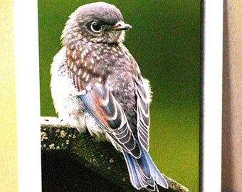 Note Cards:  WordyBird-F (Thinking of You--note cards, featuring the Eastern Bluebird)