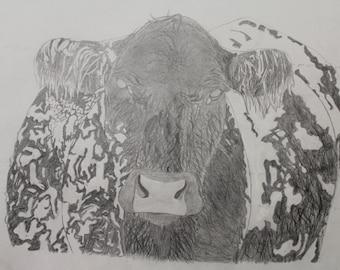 Snow Cow - Livestock Drawing