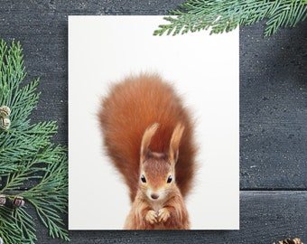 Red squirrel print, PRINTABLE art, The Crown Prints, Baby animal prints, Woodland nursery, Nursery wall art, Kids room decor, Photography