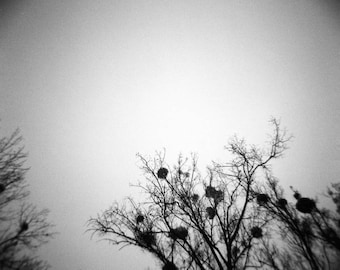 "Art Print ""Winter Trees"" Wall Art Analog Photography Landscape Photography Dark Art"