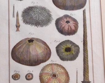 "Four antique engravings from France-- Mollusks from ""Histoire Naturele"" 1792"