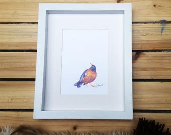American Robin // Watercolor Print