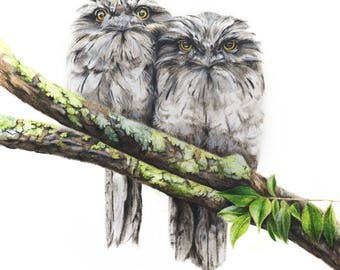 Tawny Frogmouth Print 5x7 - Frogmouth Art Print - Australian Bird Art Print - Australian Wildlife Art Print
