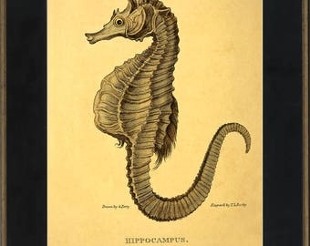 SEAHORSE vintage print - Beach house decor ~ Cottage decor ~ Hippocampus ~ Seaside resort art ~ art deco