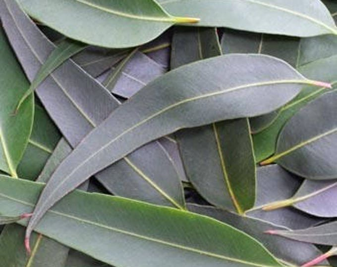 Featured listing image: Eucalyptus, Wildcrafted