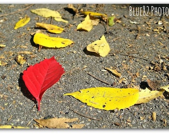 One Of A Kind - Outdoor Photography - Red Leaf - Home Decor - Yellow - Art Print - New York