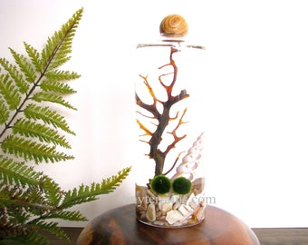 Mother's Day Gift Terrarium- Personalized Marimo Moss Ball Terrarium, Slender Vase with Wood Ball, 23 colors, gift wrap, fast shipping