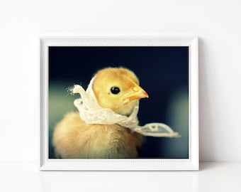 Baby Animal Photo Print Chicks in Hats Chicken In A White Lace Kerchief Bird Kerchief 8x10 (1)