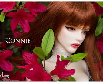BJD Light Limner Doll - Connie(Head only)