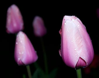 Tulip Art, Modern Decor, Pink Floral Wall Art, Original Art, Large Wall Art, Modern Art, Spring Photography, Spring Flowers, Fine Art Prints
