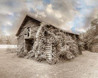 Kudzu wrapped barn