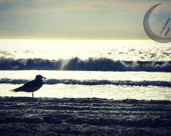 Nature Photography.  Beach Photography. Summer Photography. 8x12 Print