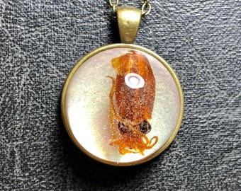 Real Tiny Squid Specimen Glass Bubble Dome Magnifier Floating Resin Cephalopod Mini Mummified Tentacles Taxidermy Vulture Culture Necklace
