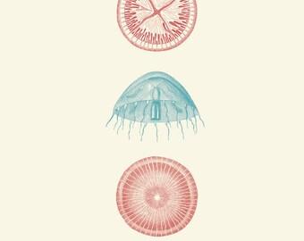 """Vintage Sea Kelp """"Varech"""" Print 8x10 P184"""