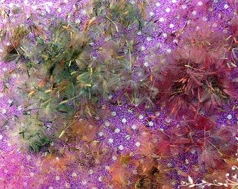 Colored dandelions, Fluffy dandelion, Dandelion, Dandelion seeds, Dandelion fluff, Dry dandelion, Flower seeds, Flowers for decoration