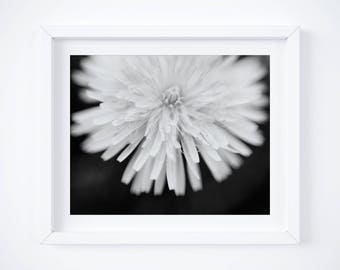 Dandelion art, Black and White Photography, Abstract Home Decor, Floral Print, Nature Art - Girlfriend photo gift - Large wall art