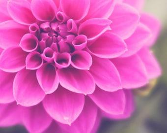 Spring Pink Dahlia Flower Fine Art Photograph, Wall Art, Home Decor, Office Art, Pink Nursery Art, Macro Photography, Close up Flower Image