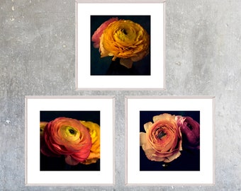 Printable Flower Wall Art Set,  Ranunculus Print Set, Large Poster Art,  Three Digital Prints, Sunset Color Decor