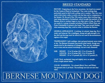 Personalized bernese mountain dog blueprint bernese mountain bernese mountain dog portrait bernese mountain dog art bernese mountain dog wall art malvernweather Gallery