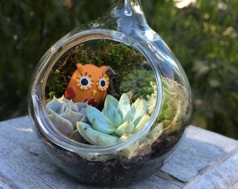 Adorable Owl Miniature Terrarium