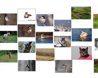 10 postcards to choose from the collection of 23 postcards nature!