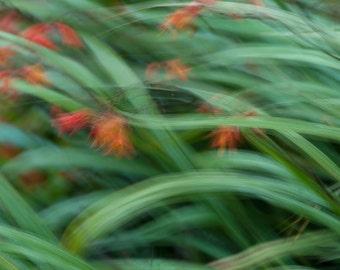 Fotografia fiori nel vento, fotografia fiori in Irlanda, fotografia di viaggio, fotografia Fine Art