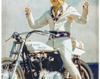 "Evel Knievel Cat Print Orange Cat Animal Photography Motorcycle Gifts Harley Davidson Pet Portrait Print - Evel ""Cat""nievel"
