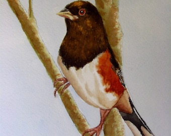 Eastern Towhee watercolor painting original bird painting 6 x 7 1/2 small painting