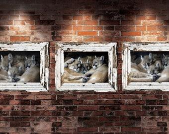 Mountain Lion Trio Blank Notecard