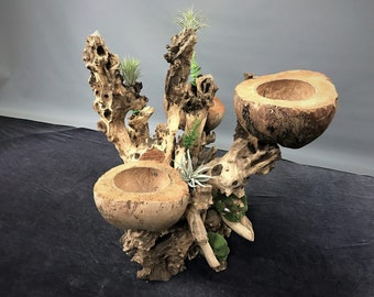 Wood Branch and Coconut Husk Orchid Planter