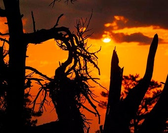 Sunset Trees at Craters of the Moon, Size 8x12, 12x18, 16x24 inches, Sunset Photo, Sunset Art, Sunrise Photo