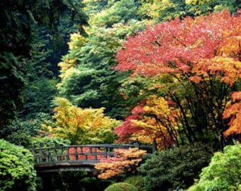 Pond and Moon Bridge at Portland Japanese Garden, Fine Art Print