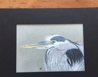 Great Blue Heron Head