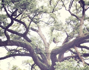 Tree Photography, Oak Tree Photography, Romantic, Nature, Old South, Louisiana, Oak Tree Art, Oak Tree Print, Tree Photography, Tree Print
