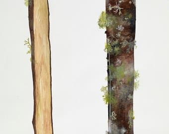 Lichen Log/ Angeles Crest