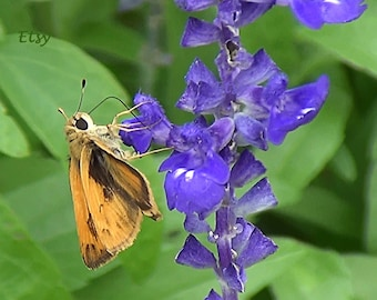 Instant Download Orange moth purple flowers photo picture nature photography Spring Printable Nature art print Stock photography Stock photo
