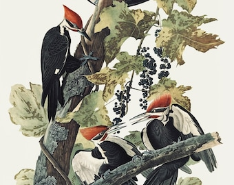 Pileated Woodpecker, Audubon print