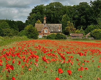 Cottage In A Poppy Field - photographic art print