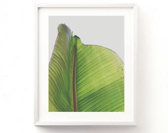 nature print, botanical print, banana leaf photograph, printable wall art, green home decor, garden art, plant photo, tropical art, dorm art