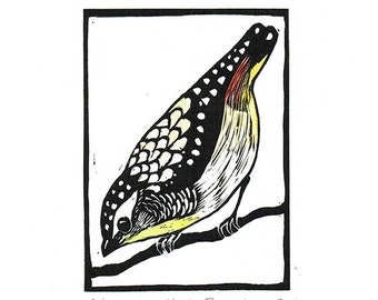 Linocut of a Spotted Pardalote with Hand Painted Water Colour, Australian Bird Print, Printmaking, Lino Print