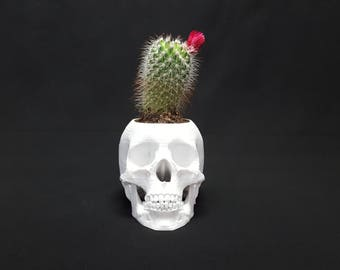 3D Printed Skull Flower Pot by 3D Cauldron