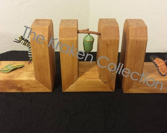Monarch Butterfly / Chrysalis / Cocoon / Caterpillar Life Cycle Bookends Educational Decorative - Kids / Children
