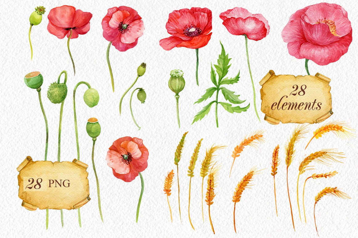 Watercolor Clipart Poppies And Ears Of Corn 28 Itemsfour Of A