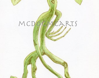 Bowtruckle- watercolor and ink