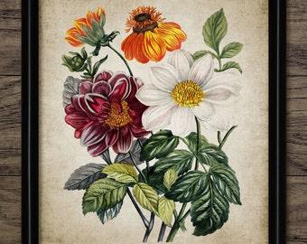 Vintage Flowers Print - Flower Illustration - Flower Decor - Botanical - Digital Art - Printable Art - Single Print #226 - INSTANT DOWNLOAD