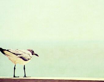 Seagull Summer Ocean Beach   - 11 x 14 art photography print by Dawn Smith