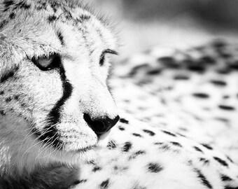 Cheetah Wall Art - Black and White Animal Photo - Monochrome Wildlife Home Decor - Fine Art Photography Print