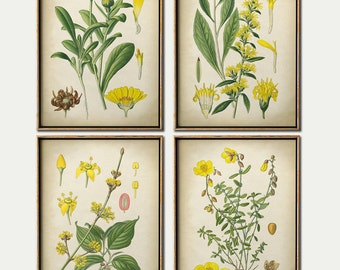 Botanical print set of 4 yellow flower prints, flower illustration, flower painting, vintage botanical art, antique flowers