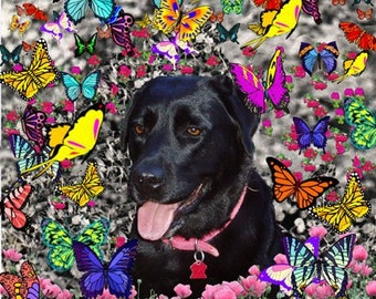 Abby in Butterflies - Black Lab ACEO, Art Card